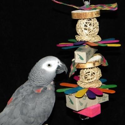Shredfest Bird Toy