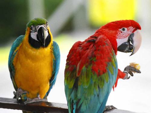 Macaws for Blog