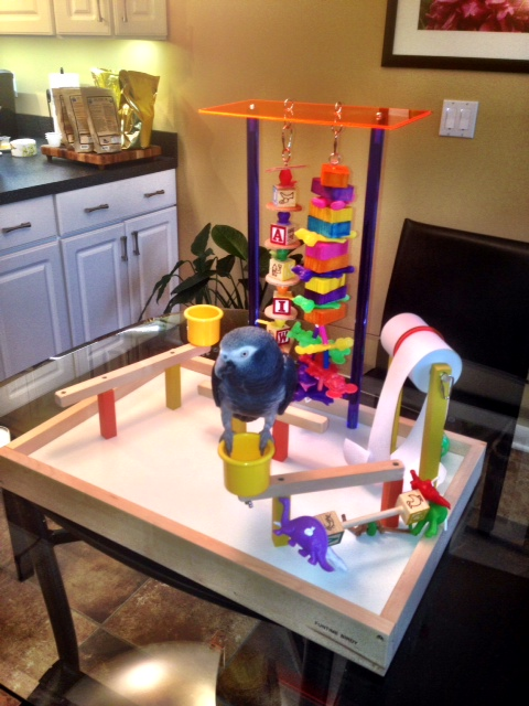 Vinny on his new FunStation Play Gym