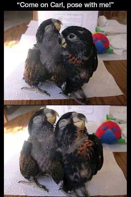 adorable baby birds posing
